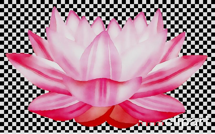 Pink lotus flower images free download