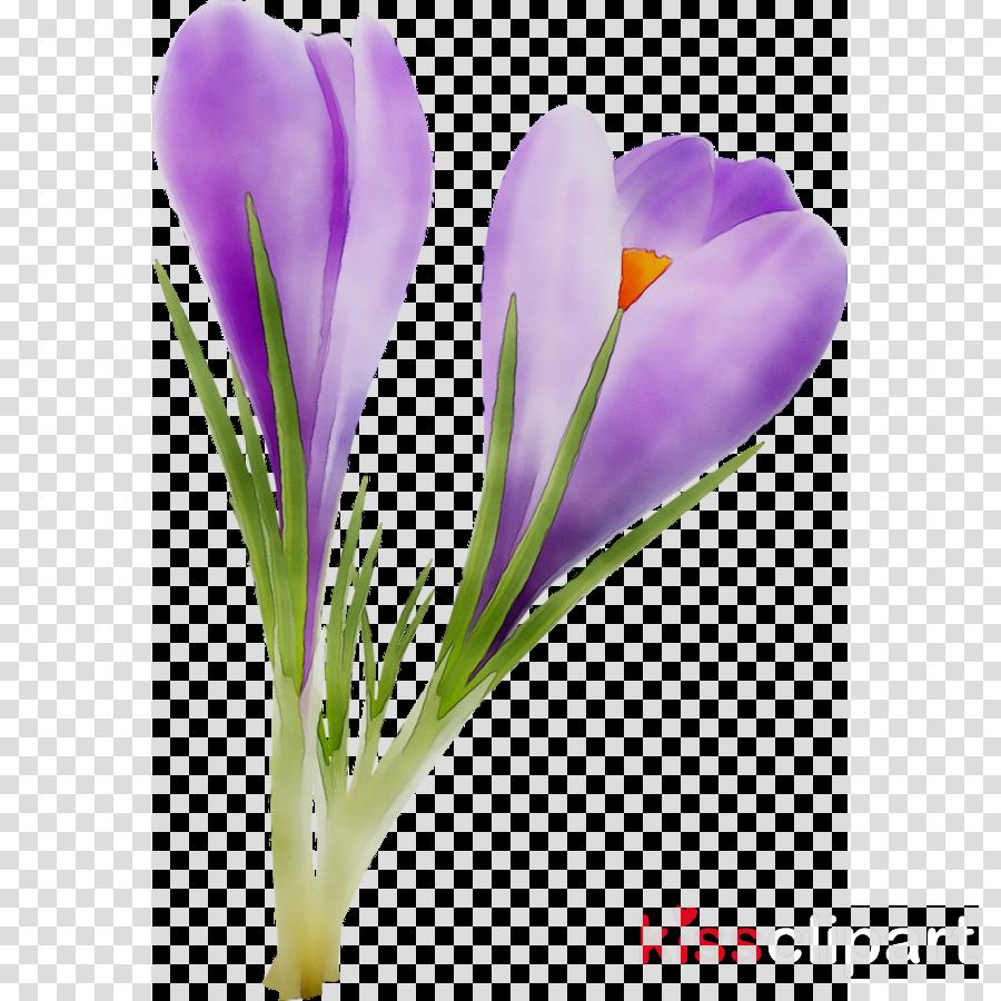 Flower Plant Purple transparent png image & clipart free
