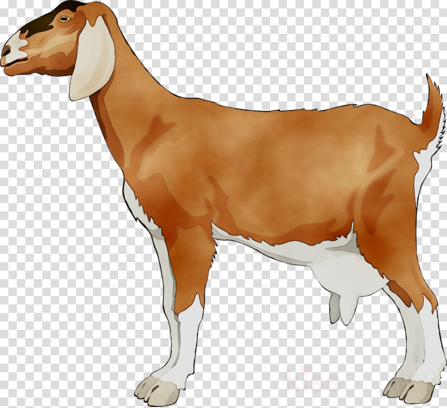 Drawing Of Family clipart - Goat, Illustration, Drawing