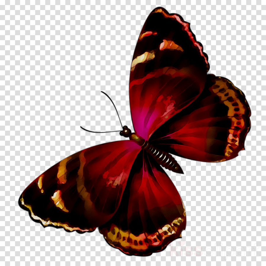 brush footed butterfly clipart Brush-footed butterflies
