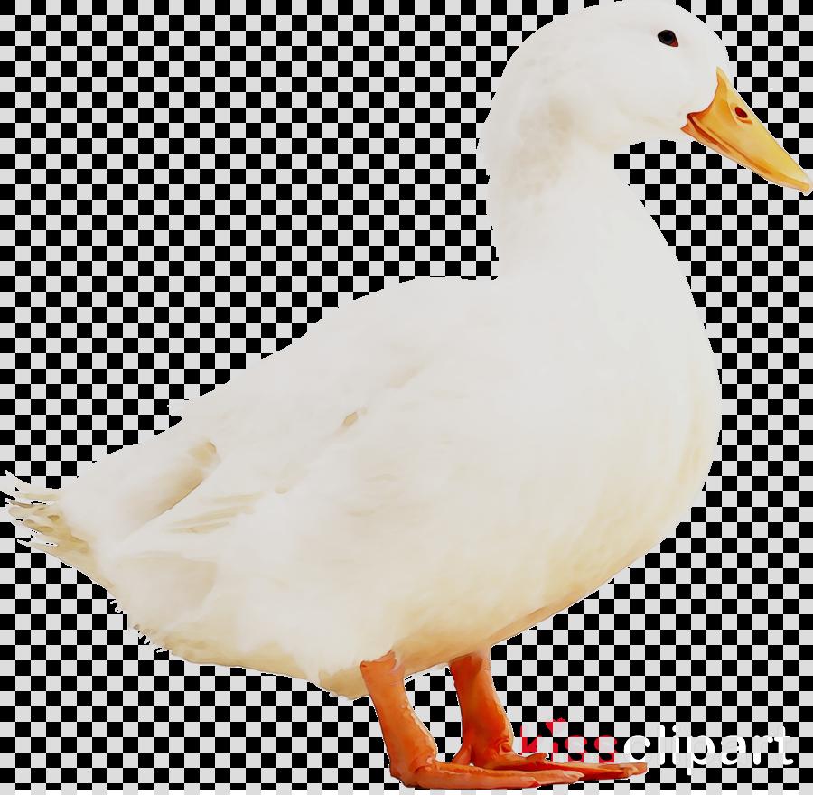 duck clipart Duck Goose Fauna