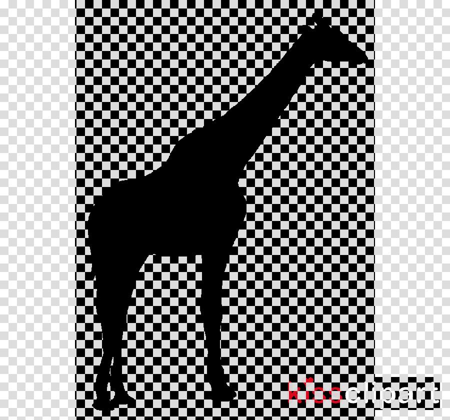 giraffe clipart Giraffe