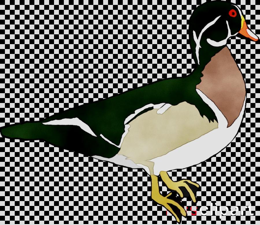 beak clipart Mallard Goose Duck