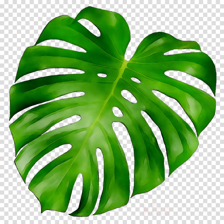 leaf clipart Leaf Plants Art