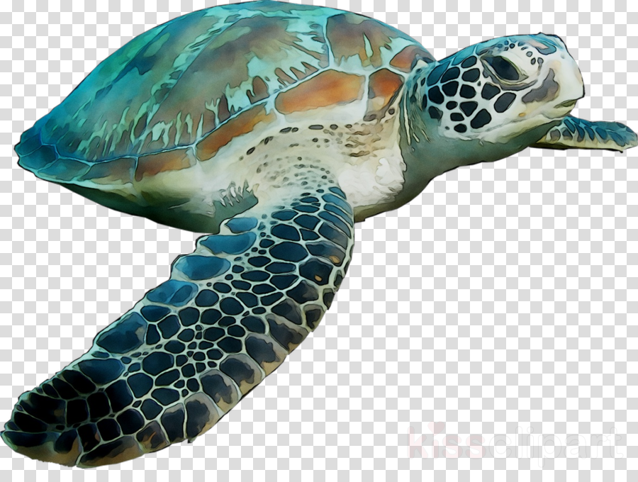 Green sea turtle clipart Green sea turtle