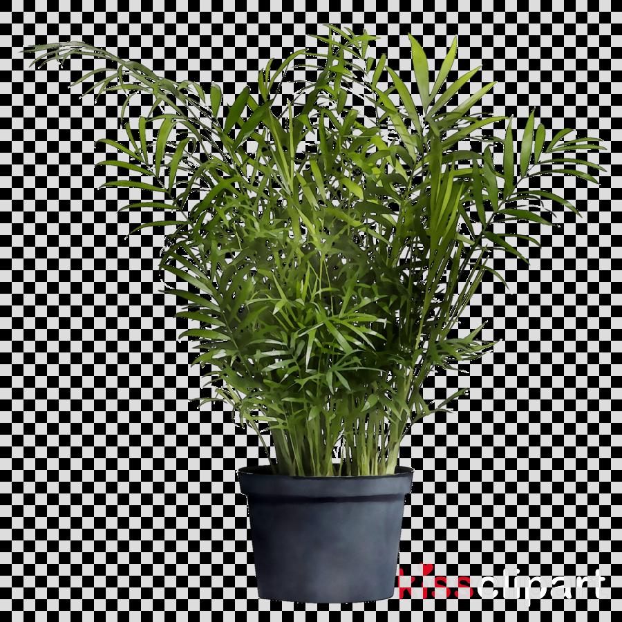 Green Grass Background Clipart Plants Tree Plant Transparent Clip Art