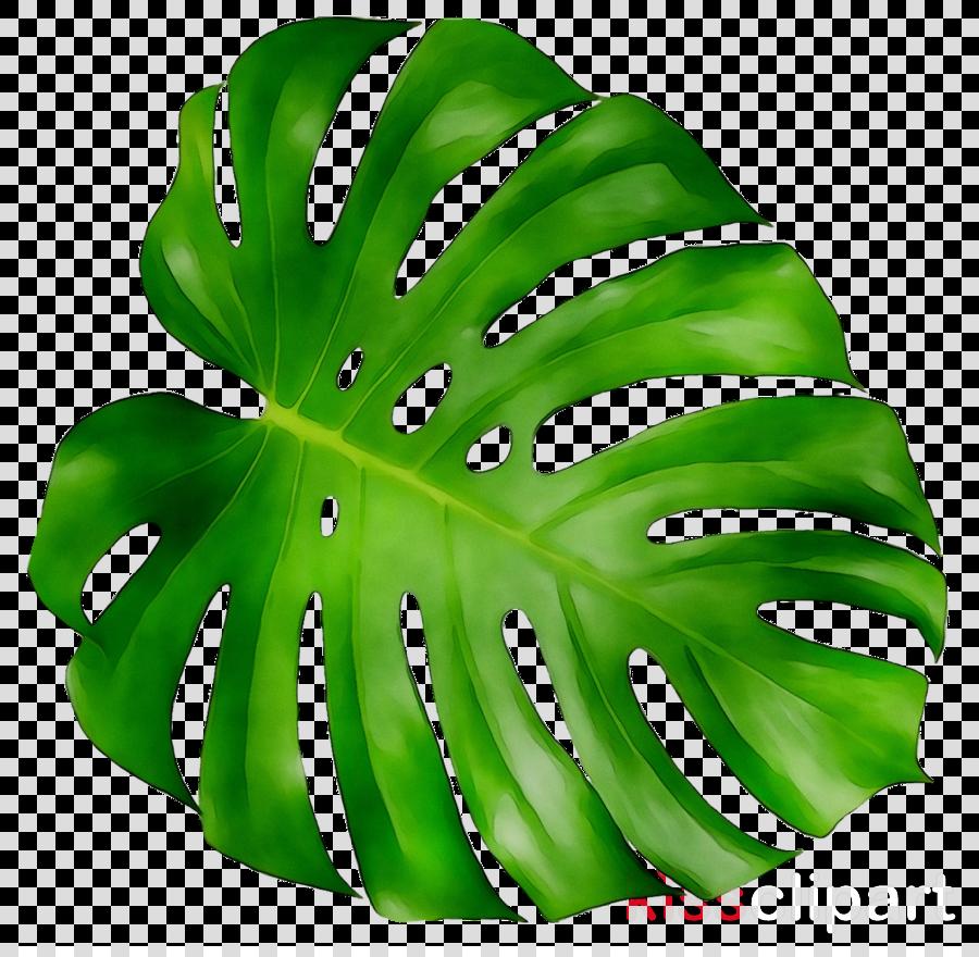 leaf clipart New York City Erol Apaydin, DDS., M.S. Kailua Dermatology and Wellness Center