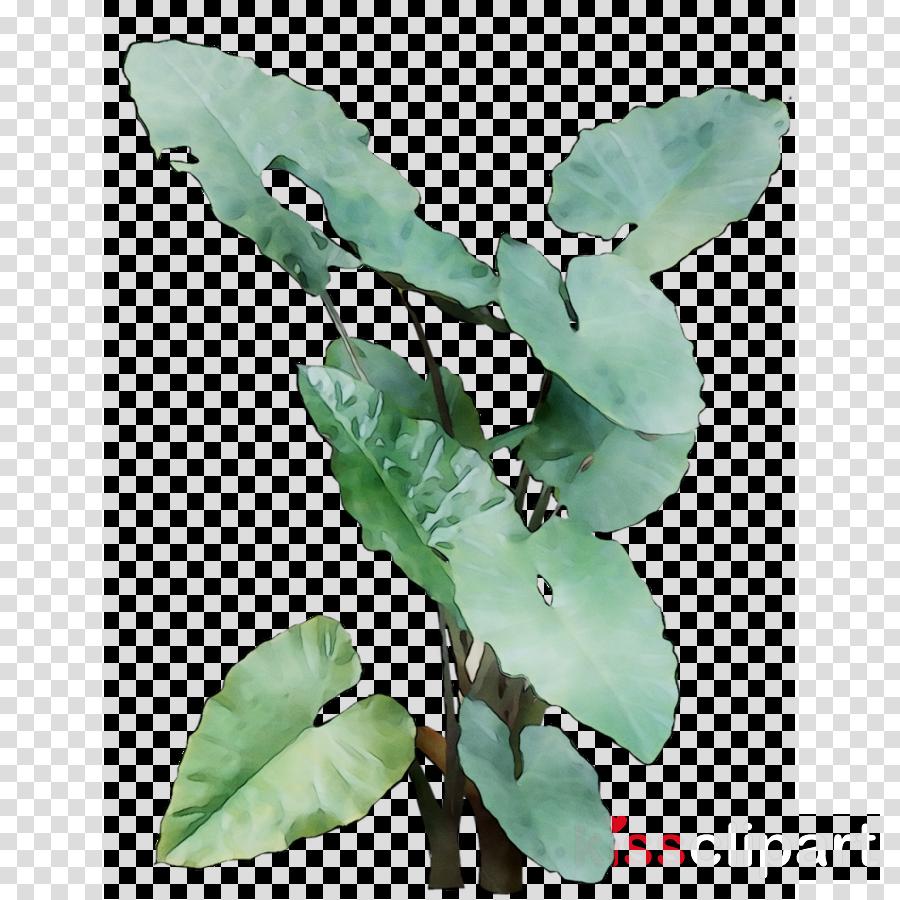 leaf clipart Leaf Flower Plant stem