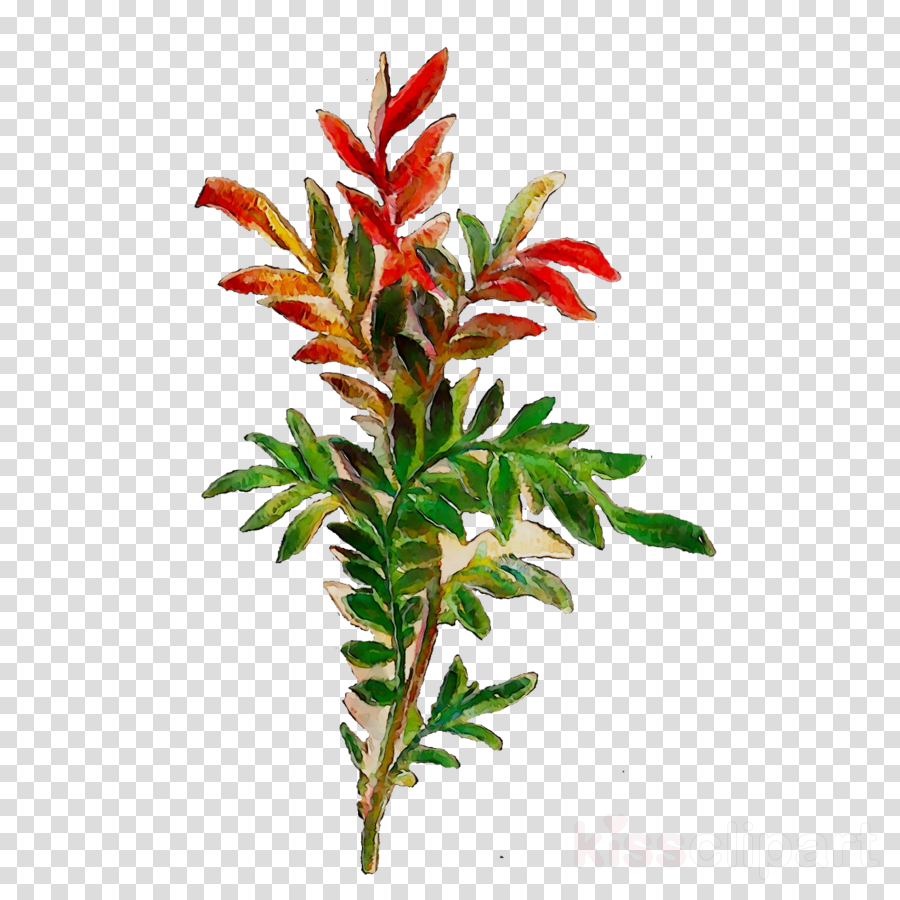 leaf clipart Plant stem Leaf Shrub