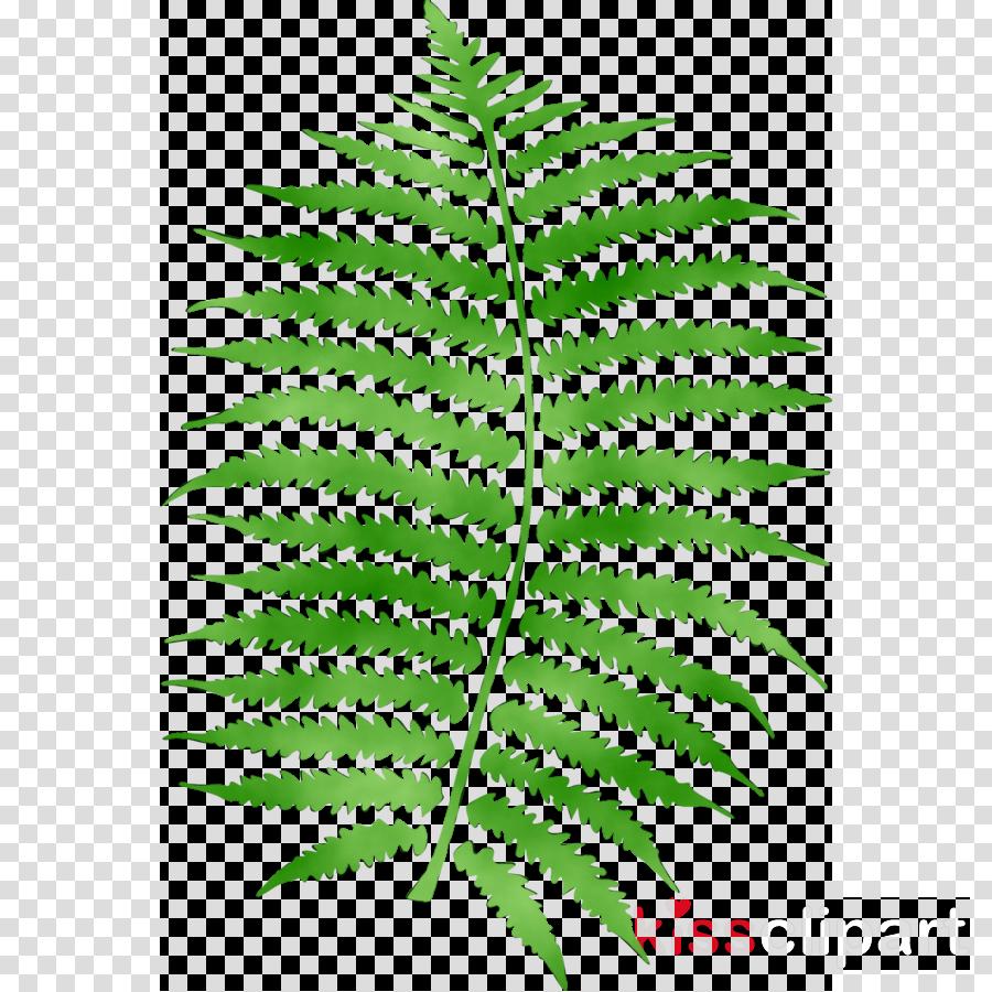 leaf clipart Fern Leaf Plants