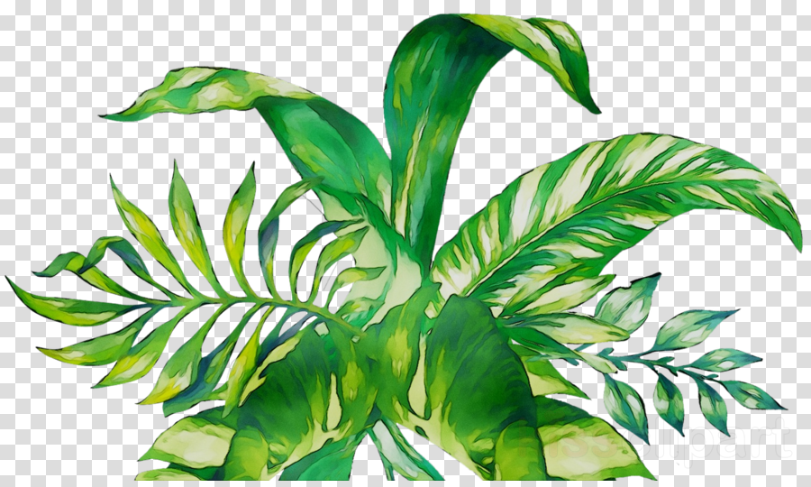leaf clipart Palm trees Leaf Plant stem