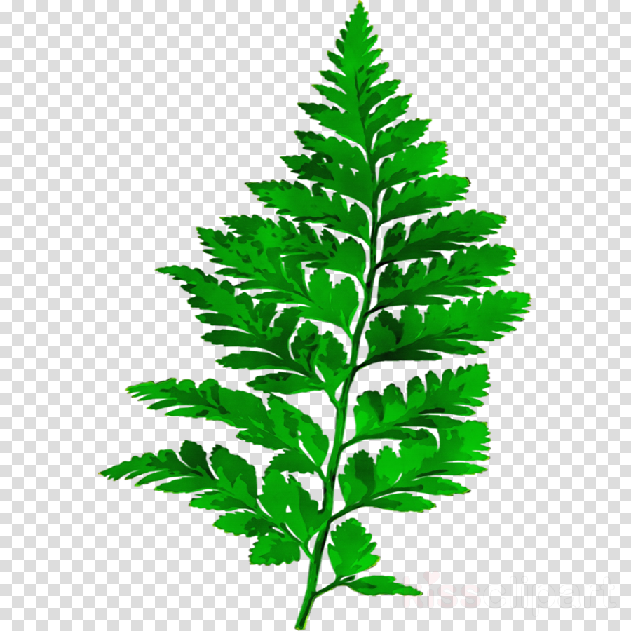 fern svg clipart Computer Icons Fern