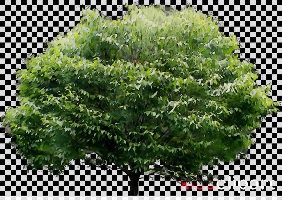 arbre jpg clipart Stock photography Tree