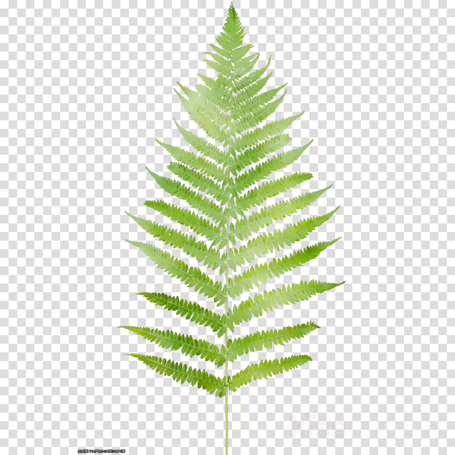 leaf clipart Fern Fir Heart Art