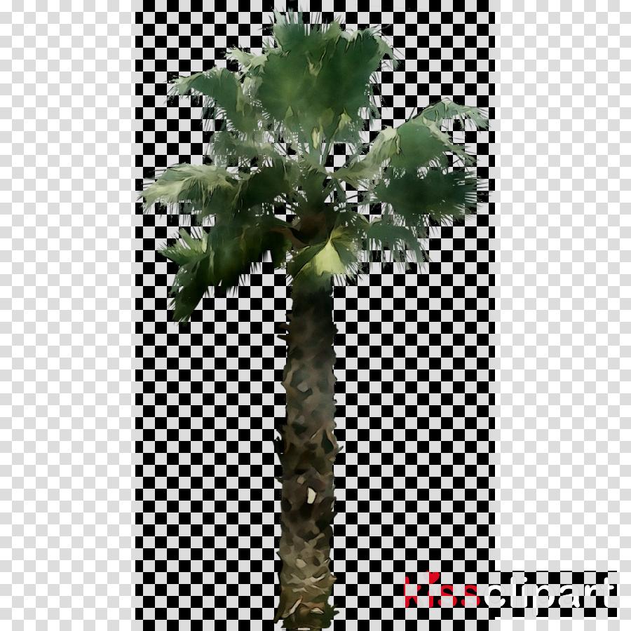 desert tree png clipart Palm trees Clip art