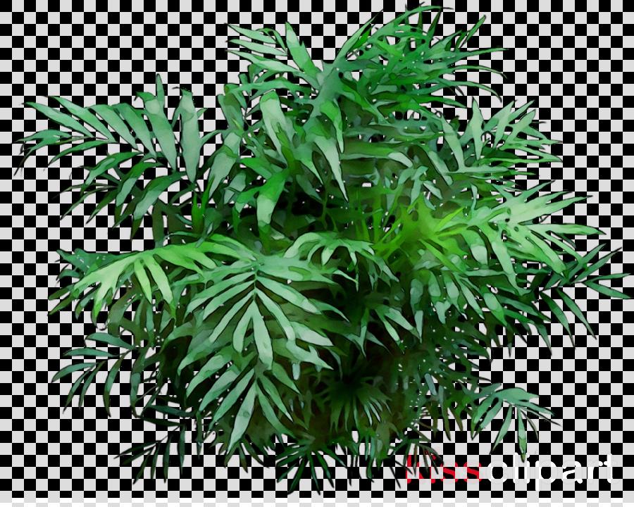 Tree Flowerpot Puzzlegrass Fern Houseplant