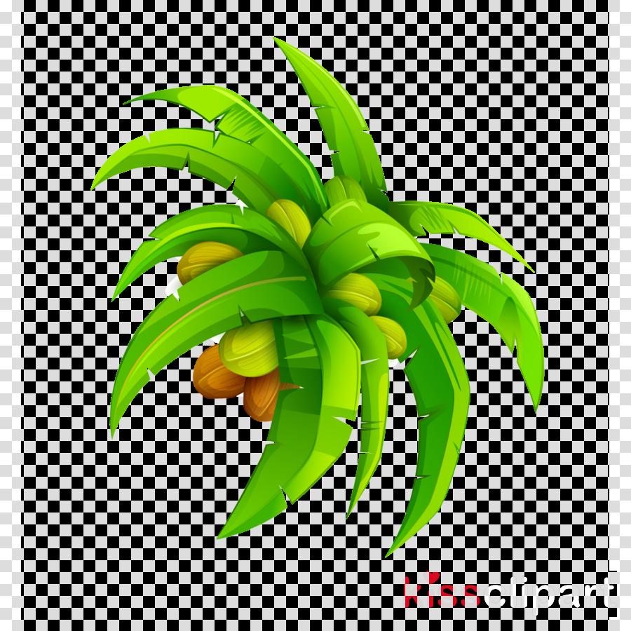 Coconut water Coconut milk Vector graphics Clip art