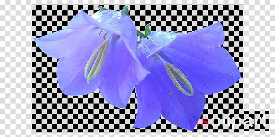 Harebell Clip art Common Bluebell Flower