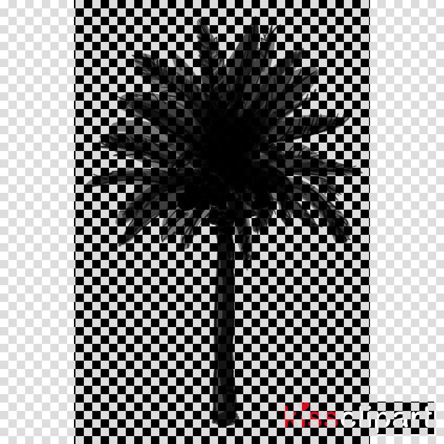 Asian palmyra palm Black & White - M Date palm Palm trees Borassus
