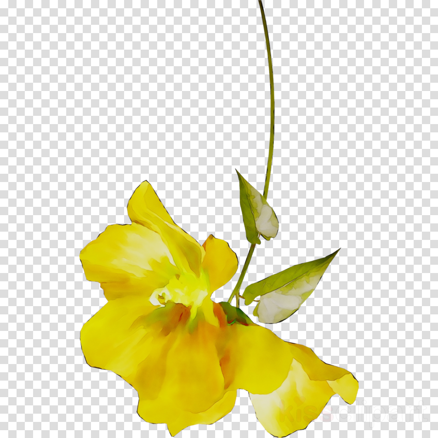 cut flowers clipart Cut flowers Floral design