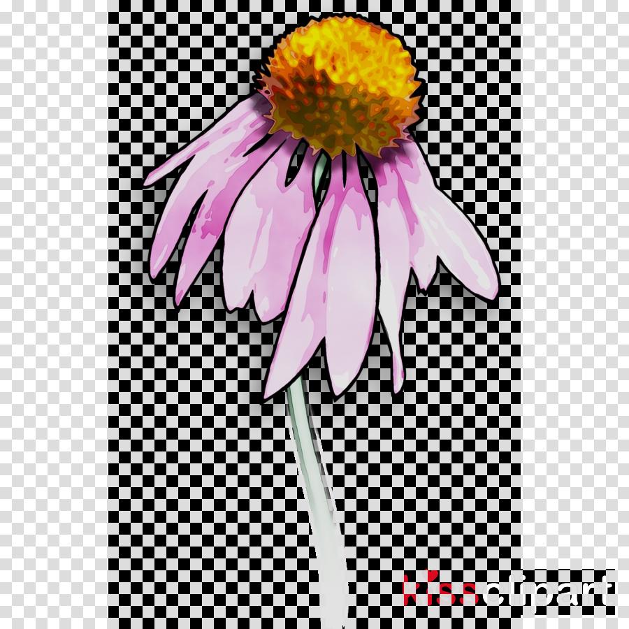 Clip art Illustration Purple Coneflower