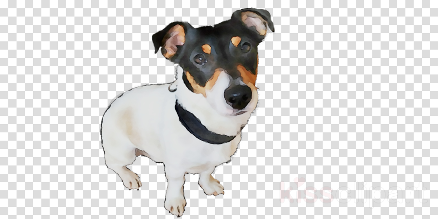 rat terrier clipart Dog breed Rat Terrier Tenterfield Terrier