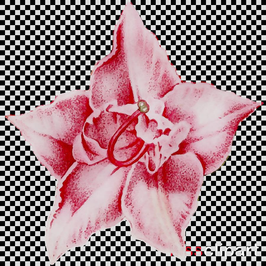 cut flowers clipart Rose family Cut flowers