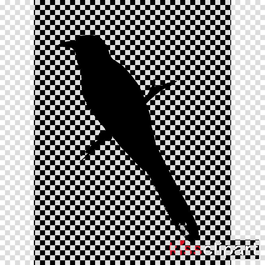 American crow Beak Hummingbird Common raven