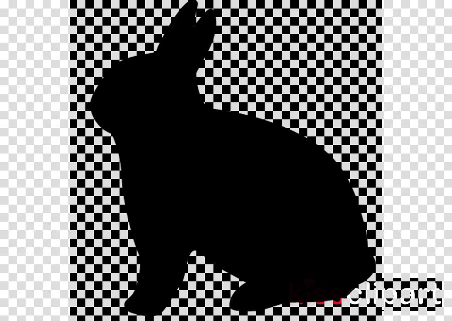 Domestic rabbit Verlagsgruppe Passau GmbH Hare Pet