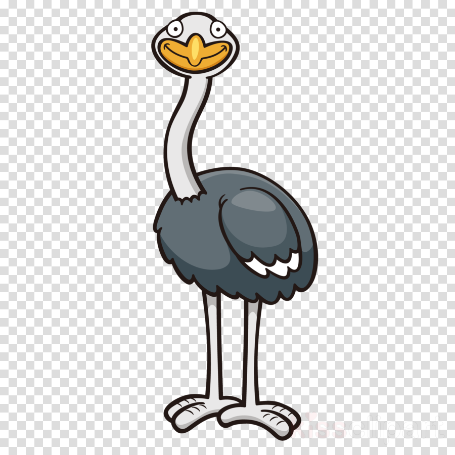 Common ostrich Cartoon Drawing Image Portable Network Graphics
