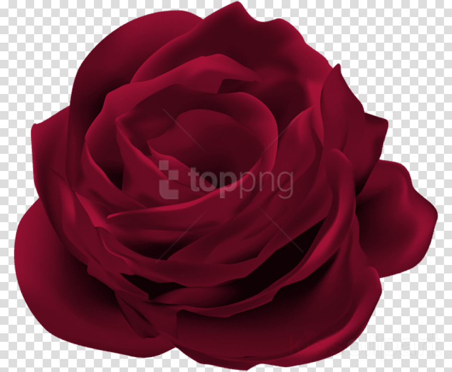 Portable Network Graphics Clip art Rose Image Flower