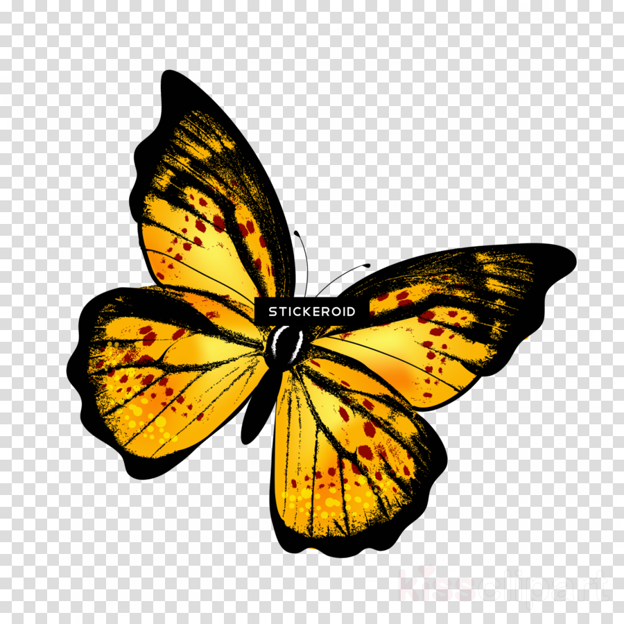 Monarch Butterfly Drawing