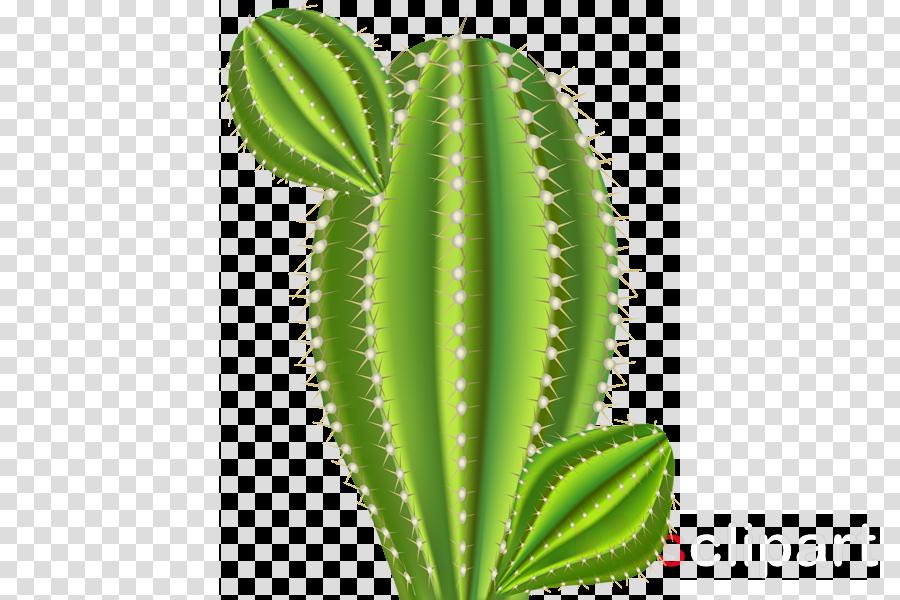 Cactus Cartoon