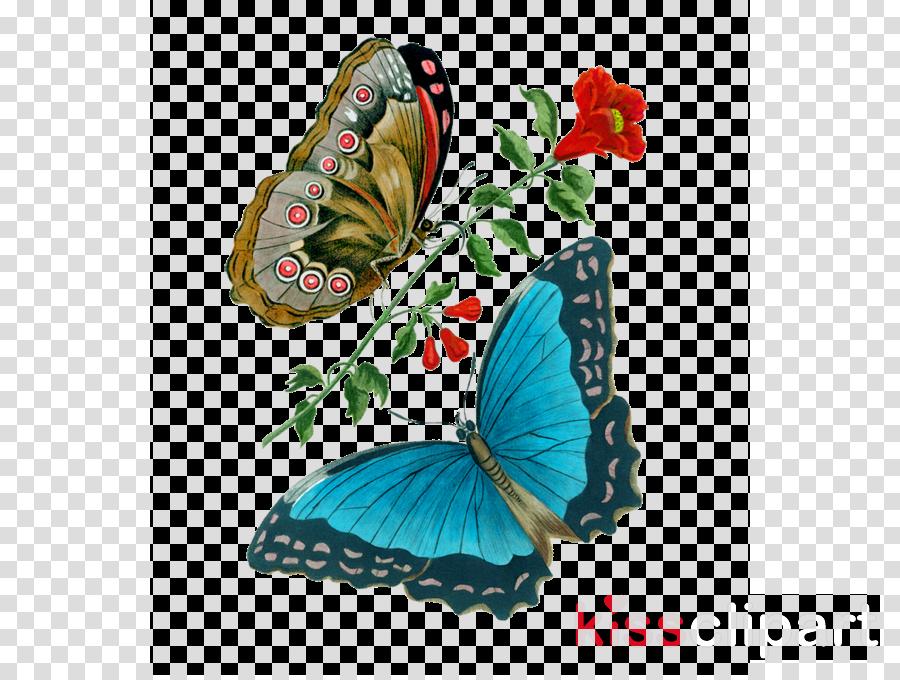 Monarch butterfly Illustration Illustrator Painting