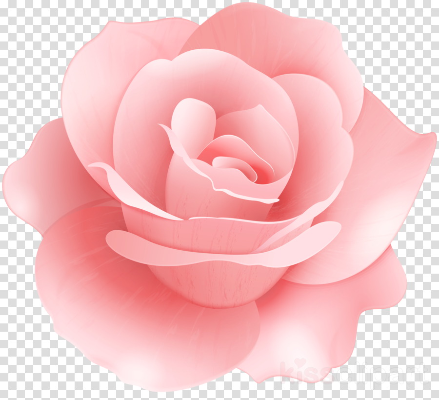 Rose Vector graphics Stock photography Royalty-free Image