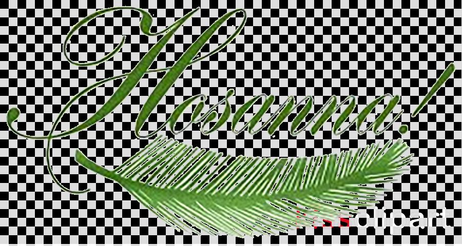 Palm Sunday Desktop Wallpaper Image Hosanna Holy Week