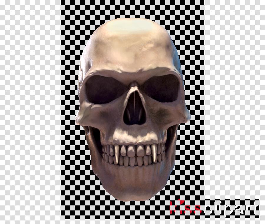 Skull Jaw Skeleton