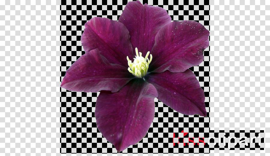 Blog Image Portable Network Graphics Hashtag Photograph