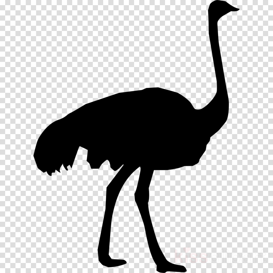 Common ostrich Scalable Vector Graphics Clip art Portable Network Graphics Image