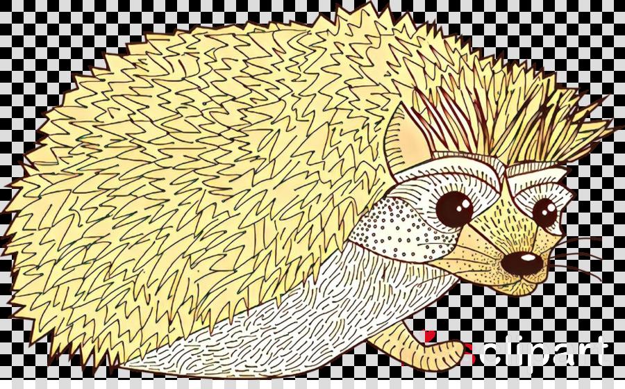 Domesticated hedgehog Porcupine European hedgehog Echidna