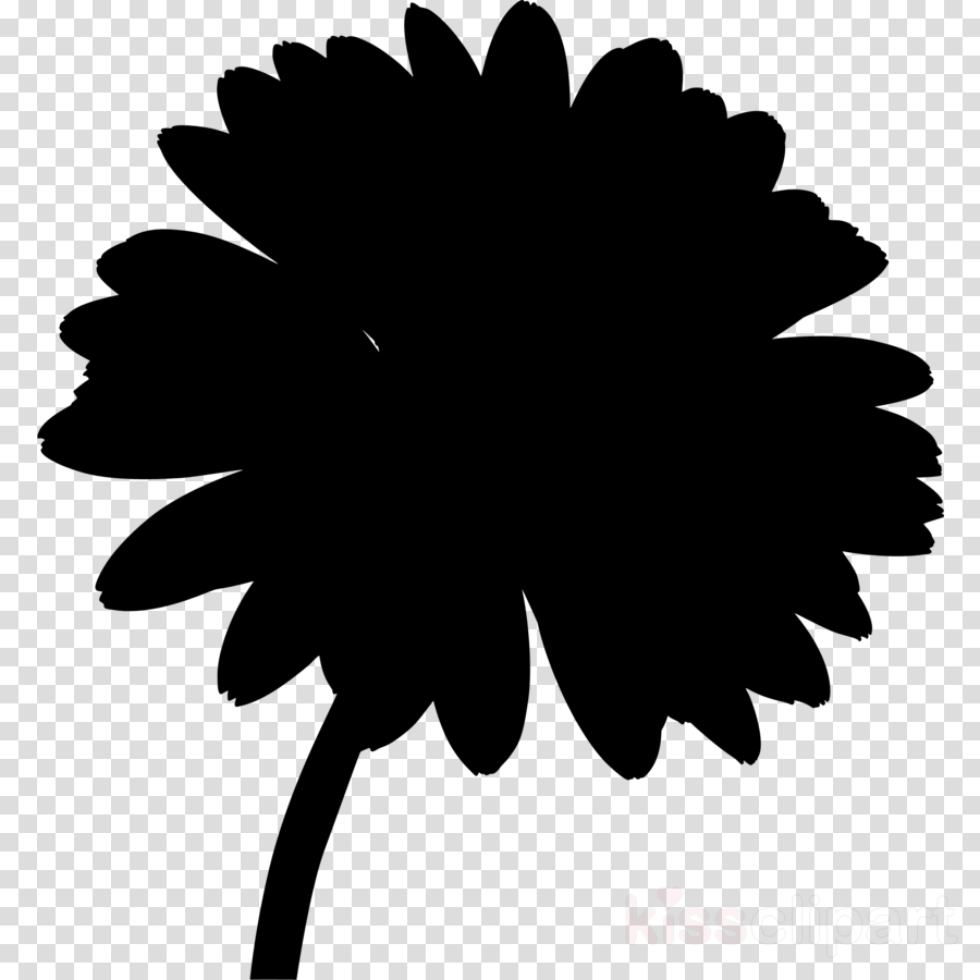 Favorite Flowers Air Fresheners Clip art Transvaal daisy
