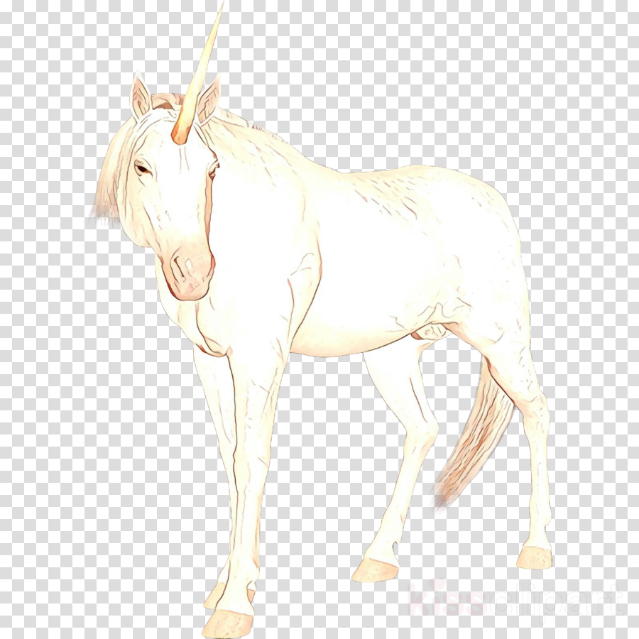 Mule Mustang Foal Mare Donkey