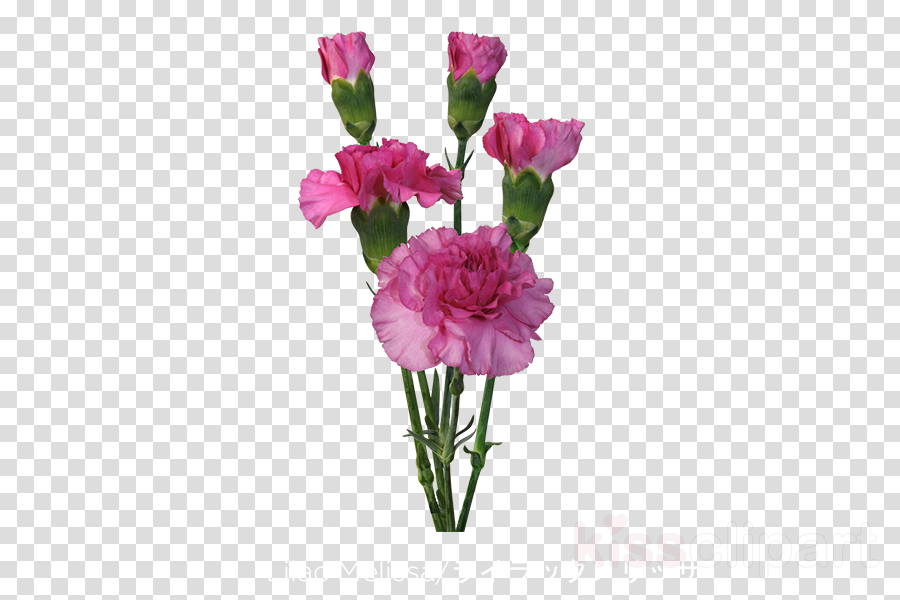 Carnation Cut flowers Garden roses Floral design