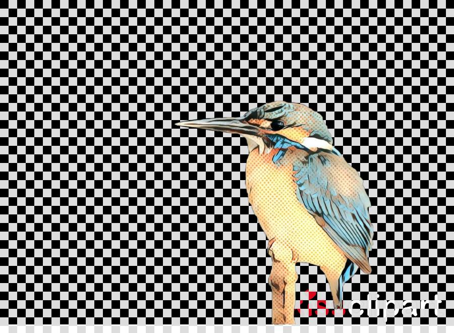 Beak Fauna Feather Coraciiformes