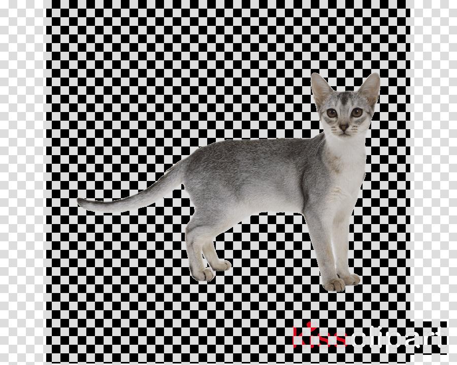 Abyssinian cat Bengal cat Clip art Thai cat British Shorthair