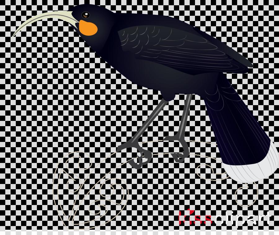 Songbirds Clip art Portable Network Graphics Common ostrich