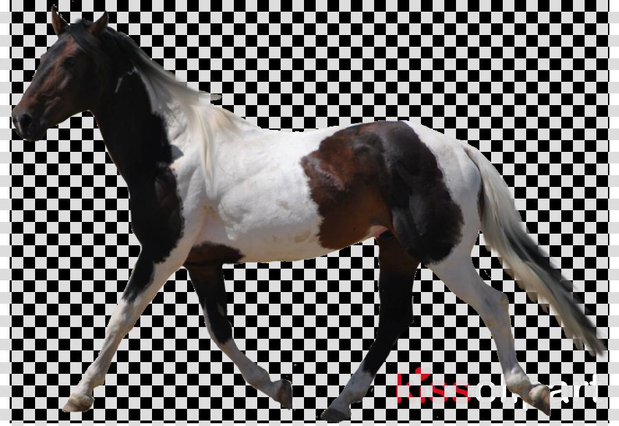 American Paint Horse Clip art Transparency Portable Network Graphics Desktop Wallpaper
