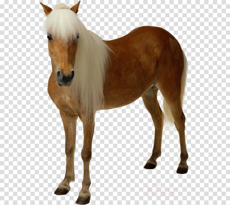 American Paint Horse Clip art Foal Transparency Stallion