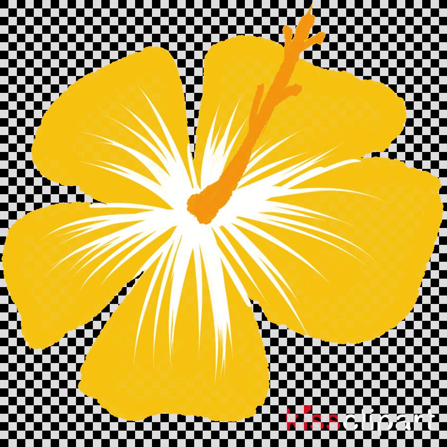 Rosemallows Yellow Illustration Drawing Orange