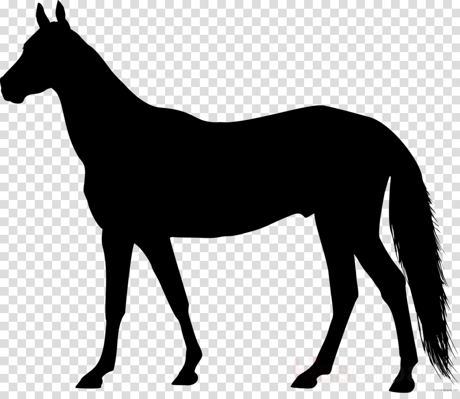 Clip art American Paint Horse Thoroughbred American Quarter Horse Portable Network Graphics
